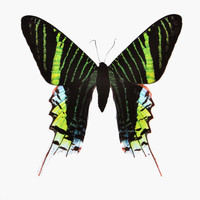 Butterfly #7 Print