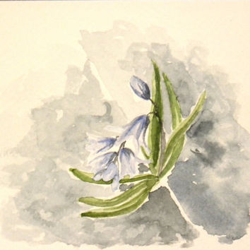 Siberian squill. Original watercolor painting of a tiny flower blossoming in Finnish spring.