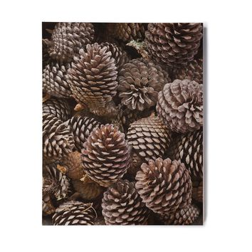 "Susan Sanders ""Brown Pine Cones"" Brown Tan Nature Holiday Photography Birchwood Wall Art"