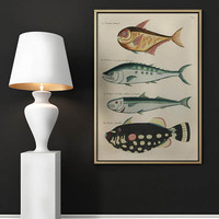 Fish Poster| Sea Life Art| Taxonomy Wall Art| Fishes Wall Art| Fishes Print| Animal Poster| Natural History| Vintage Zoology| HAP019