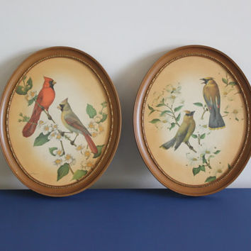 Vintage Rudolf Freund oval framed bird prints, bird decor, bird art, wall hangings
