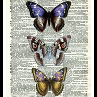 """Vintage Butterfly Art Print Poster 8 x 10 or 11 x 14"""" Unframed"""