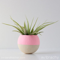 Sweet Pink Air Plant Pot with Air Plant