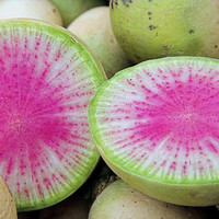Open Pollinated, Watermelon Radish, Unique Vegetable, Gardeners Favorite, 10 Seeds