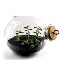 Xtra Terrarium - Inhabitat Shop