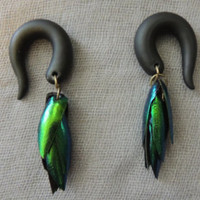 Jewel Beetle Wing ear plugs / gauges .. size 2-00+ iridescent, metallic green, lightweight, ethically harvested, black, stretched ears