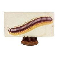 Vintage Millipede Insect Flash Card Bug Color Illustration Paper Ephemera Creepy Art Decor Nature Collage Altered Assemblage Craft Supply
