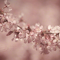 Spring photo cherry blossoms home decor pale pink by ImagesByCW