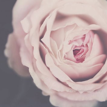 rose photography, rose print, flower photography, pink fine art print, botanical, flower print, nature photography, home decor, wall decor