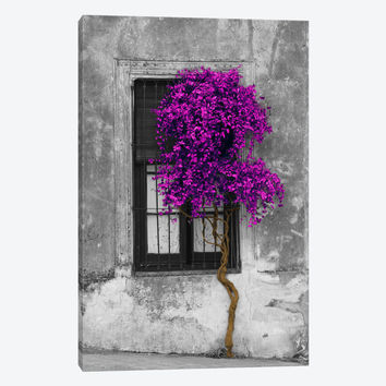 """Tree in Front of Window Purple Pop Color Pop by Panoramic Images Canvas Print 40"""" L x 60"""" H x 1.5"""" D"""