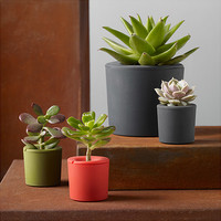 Rootcup® Planters | MoMA