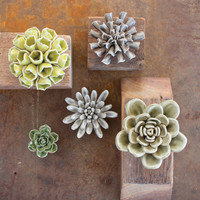 Set of 5 Ceramic Succulents - Greys & Greens