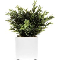Plastic Boxwood in White Ceramic Pot | Hobby Lobby