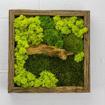 "Green Bridge - Water free green wall art, moss and preserved plants - Vertical garden, green wall decor - 12""x 12"" Rustic Frame"