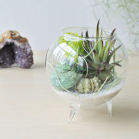 "NEW ""Purple Tips"" Air Plant Terrarium - Air Plant, Tillandsia, Living Home Decor, Gift , Hanging Terrarium , Reindeer"