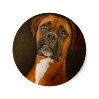 Cute boxer stickers