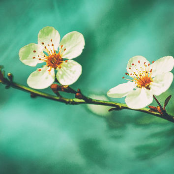 "Flower Photography - white cherry blossom flowers Tiffany blue 8x10 prints 11x14 spring photography 16x20 blue wall decor ""Together We Shine"