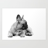 FrenchBulldog Puppy Art Print by ritmo boxer designs