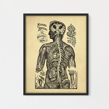 Nervous System Printable, The Structure of Man, Human Anatomy Wall Art, Vintage Anatomy Art Print, Medical Poster, Antique Anatomy Printable
