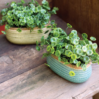 Set of 2 Artificial Money & Lucky Grass Succulents in Oval Pots