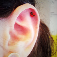 Red Ladybug Surgical Steel Stud Earring. Perfect for Helix and Cartilage Piercings.