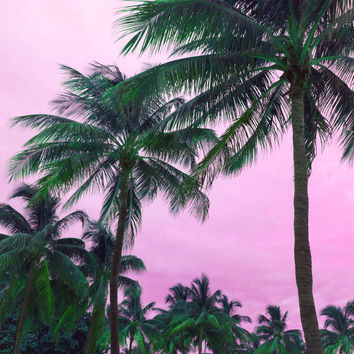 Pink Tropical Palm Tree Fine Art Photography Print