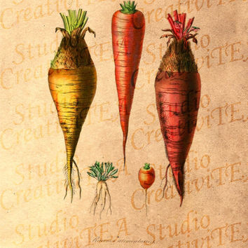 Vintage Root Vegetables Tea Stained Print