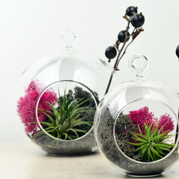Modern Terrarium - Air Plant - Hanging Glass Orb - Green Gift - Home Decoration