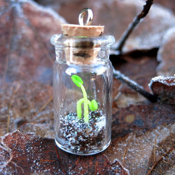 Miniature Seedlings Sprout in a Glass Bottle Clay Plants Emerging New Life Early Spring Frosted Soil Spring Greent New Beginning New Sprout