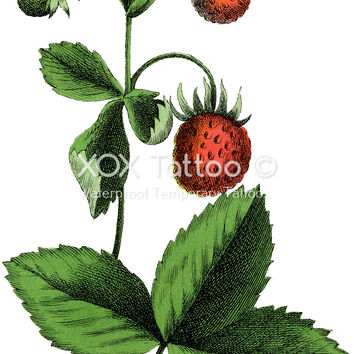 Strawberry Patch Plant Waterproof Temporary Tattoos