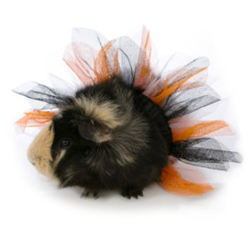 All Living Things® Pet Halloween Tutu Small Pet Costume | Costumes | PetSmart