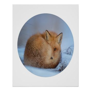 Fox Photograph In A Circle 24 X 30 Poster