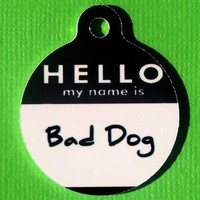 Pet Tag Hello My Name Is in Black MEDIUM Sized by BowWowzerZ