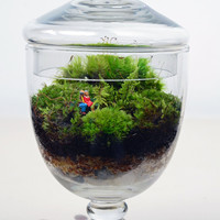 Moss terrarium // Little People // Apothecary Jar Planter // Indoor Garden // Home Decor