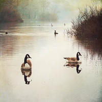 Epic Art COO137P Ducks by Sylvia Cook: 26 x 18 Giclee Paper
