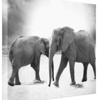 Black & White Dual Elephants - Canvas Gallery Wall Art - 8 x 10, 16 x 20 or 24 x 36