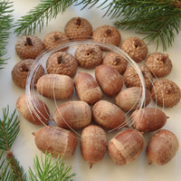 DIY Acorn Ornament Decoration Kit Set of 12 Make Your Own Glittered Acorns / Acorn Supply by FeistyFarmersWife