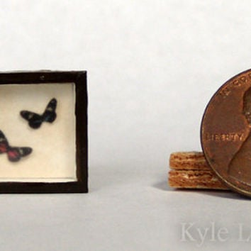 Dollhouse Miniature Riker Mount - Heliconidae Butterflies ~ Heliconius doris  Pair - One Inch Scale Butterfly Display - Home Decor