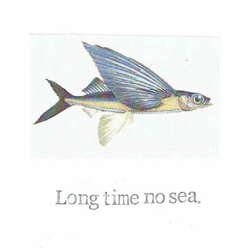 Long Time No Sea Flying Fish Card | Funny Miss You Keep In Touch Ocean Travel Fishing Humor Weird Animal Pun