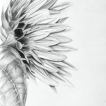 Original Pencil Drawing Sunflower 11X14