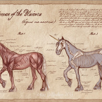 Anatomy of the Unicorn- 13x19in Art Print- Unicorn Poster- Medical Illustration