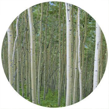 Paul Moore's Birch In Uncompahgre National Forest Circle wall decal