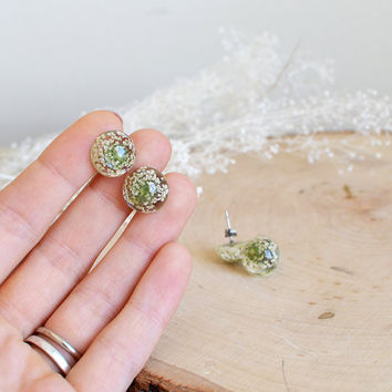 Real flower earrings, earring studs - surgical steel studs, real flower jewelry, gift for a woman, Queen Anne's Lace , gift under 30