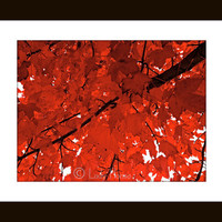 Large Wall Art, nature photography, red and black, fine art photography, Color photography, red and black decor, home decor wall art,