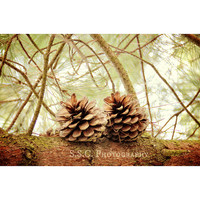 Winter photography. pinecones. pine tree. forest photo. tree art. green and brown. rustic home decor. festive holiday art. cabin decor.