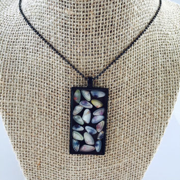 Colorful Coquina Family Necklace, Shell collection, Beach Finds Jewelry, Modern Pendant, N100-2