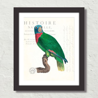 Vintage French Parrot Collage No. 30 Canvas Art Print