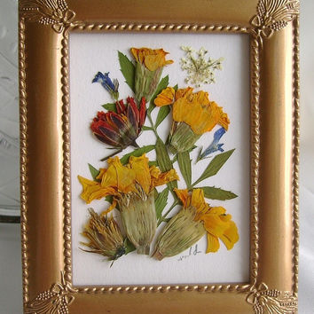 Presed flower marigold picture - Framed pressed marigolds - Real botanicals - Yellow flowers - Blue flower lobelia - Gold frame - Floral