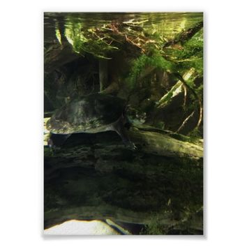 Turtle Photo Poster