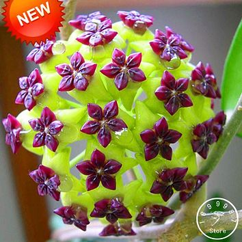 Time-Limit!!Hoya Seeds,Potted Flowers Bonsai plants Hoya Seed, Orchid Seed DIY Home Garden 100 Particles/lot,#1TIRLS